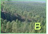 TUC Bosque
